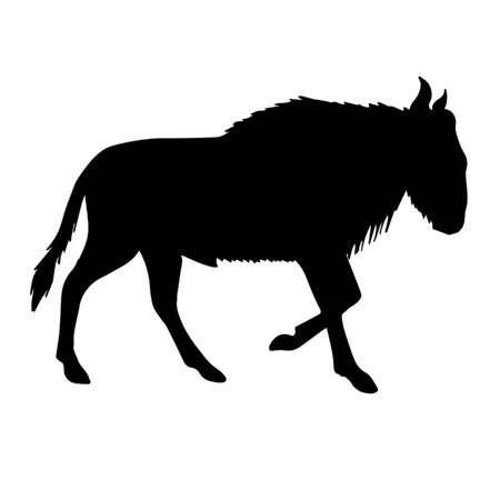 Vector black silhouette of african wildebeest isolated on white background