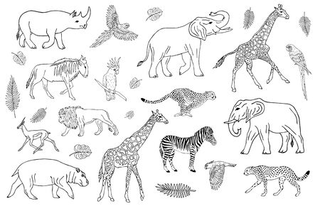Vector set collection of outline hand drawn sketch African animals isolated on white background