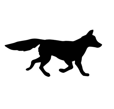 Vector black silhouette of fox isolated on white background