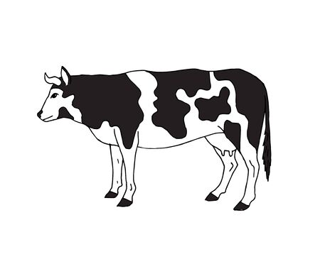 Vector hand drawn sketch cow isolated on white background
