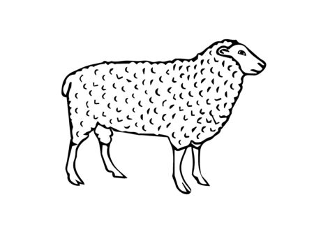 Vector hand drawn sketch sheep isolated on white background Reklamní fotografie - 130783577