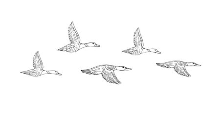 Vector hand drawn sketch flock of flying duck isolated on white background