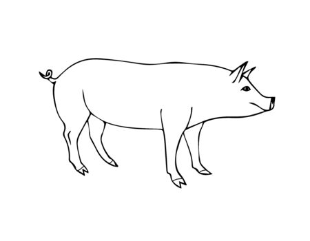Vector hand drawn doodle sketch pig isolated on white background
