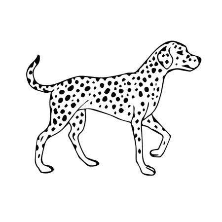 Croquis dessinés à la main de vecteur chien Dalmatien isolé sur fond blanc