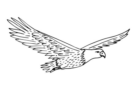 Vector hand drawn sketch flying American eagle isolated on white background