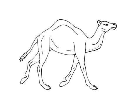 Dromedario di schizzo disegnato a mano di vettore un cammello gobbo isolato su sfondo bianco Vettoriali