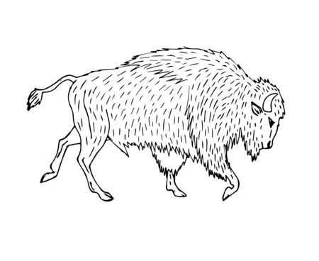 Vector hand drawn sketch wild american bison ox isolated on white background