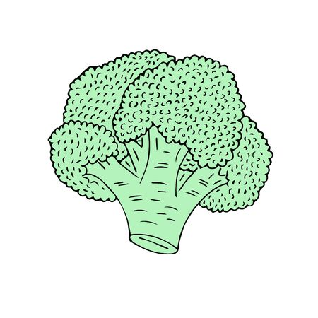 Vector hand drawn sketch green broccoli isolated on white background