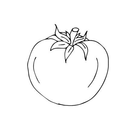 Vector hand drawn outline tomato isolated on white background