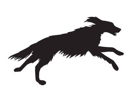 Vector black hunting setter dog silhouette isolated on white background Illustration