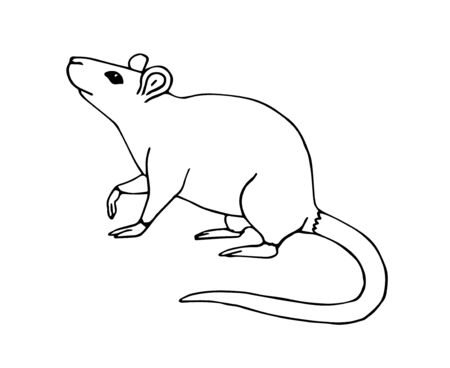 Vector hand drawn sketch doodle rat mouse isolated on white background Vector Illustration
