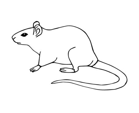 Vector hand drawn sketch rat mouse isolated on white background