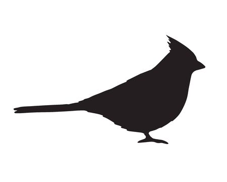 Vector black flat red cardinal bird silhouette isolated on white background