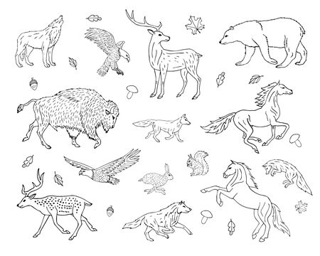 Vector hand drawn sketch set bundle of wild American animals isolated on white background