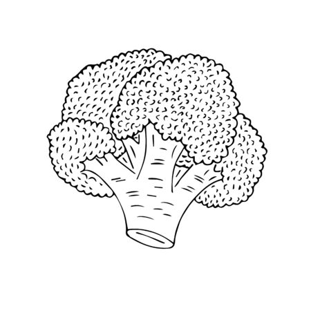 Vector hand drawn sketch broccoli isolated on white background