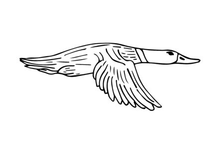 Vector hand drawn sketch duck isolated on white background