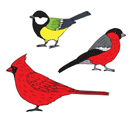 Vector set bundle of hand drawn doodle sketch red cardinal, tit and bullfinch birds isolated on white background Stock Illustratie
