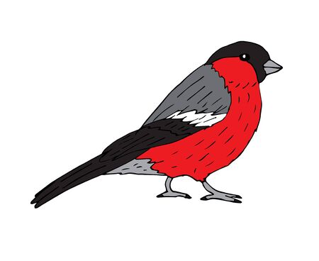 Vector hand drawn sketch colored bullfinch isolated on white background