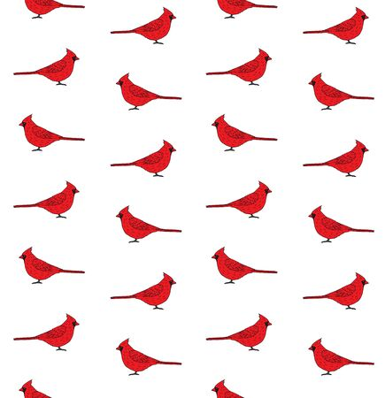 Vector seamless pattern of hand drawn red cardinal bird isolated on white background