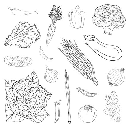 Vector hand drawn set bundle of sketch doodle vegetables isolated on white background Ilustrace