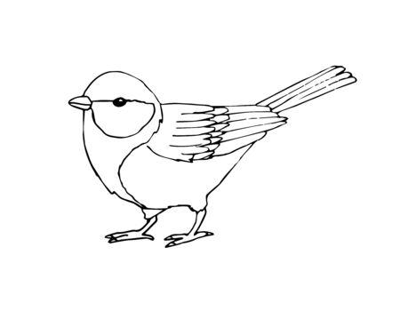 Vector mano dibujada boceto pájaro tit negro aislado sobre fondo blanco.