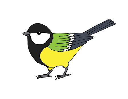 Vector hand drawn colored tit bird isolated on white background
