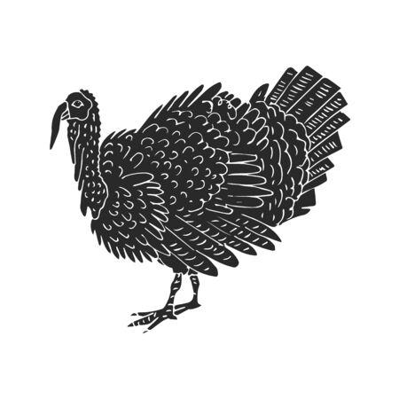 Vector dibujado a mano dibujo doodle pavo negro aislado sobre fondo blanco. Ilustración de vector