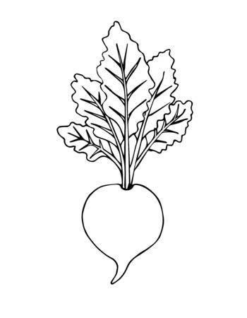 Vector hand drawn black doodle sketch beet isolated on white background