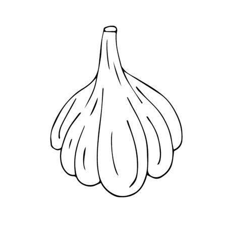 Vector hand drawn sketch garlic isolated on white background