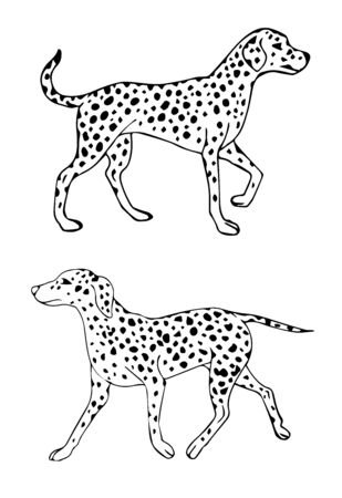 Vector black outline hand drawn sketch doodle Dalmatian dog isolated on white background