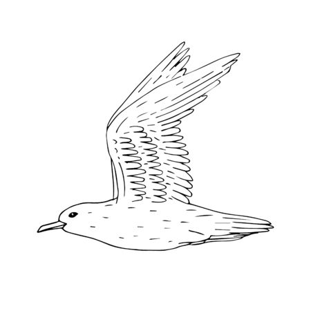 Vector hand drawn doodle sketch outline flying sea gull isolated on white background 向量圖像