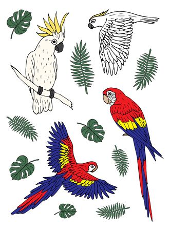 Vector set bundle of hand drawn doodle sketch colored different parrots isolated on white background Vectores