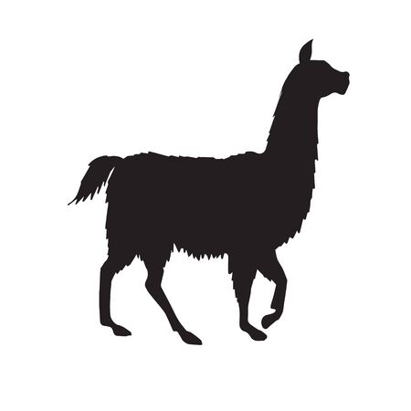 Vector black llama silhouette isolated on white background