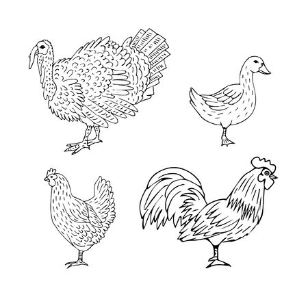 Vector set bundle of hand drawn doodle sketch domestic birds isolated on white background Ilustracja