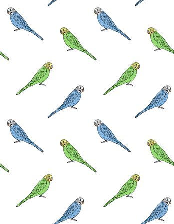 Vector seamless pattern of hand drawn doodle sketch colored budgie parrot isolated on white background