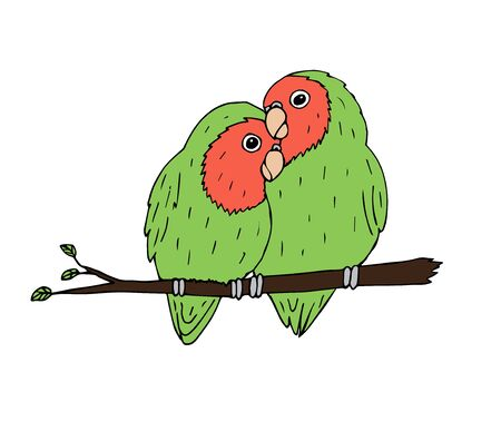 Vector hand drawn doodle sketch green lovebirds parrots pair isolated on white background