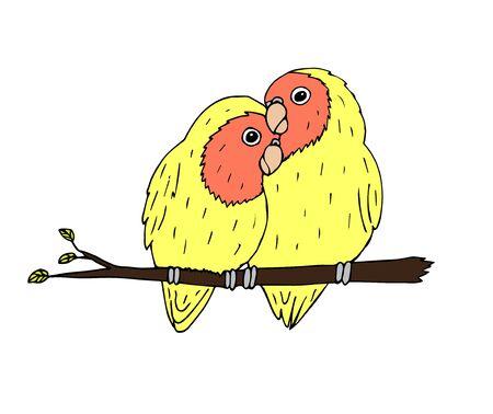 Vector hand drawn doodle sketch yellow lovebirds sitting on branch parrots pair isolated on white background