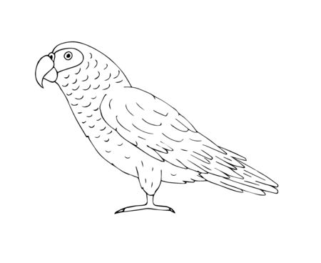 Vector hand drawn doodle sketch gray African parrot isolated on white background Иллюстрация