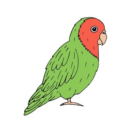 Vector hand drawn doodle sketch green lovebird parrot isolated on white background