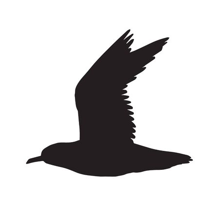 Vector black flying sea gull silhouette isolated on white background 일러스트