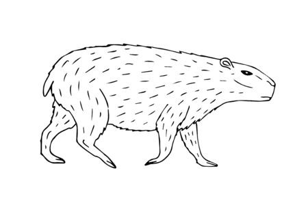 Vector hand drawn sketch capybara isolated on white background