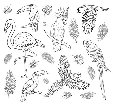 Vector set bundle of hand drawn doodle sketch outline tropical birds isolated on white background