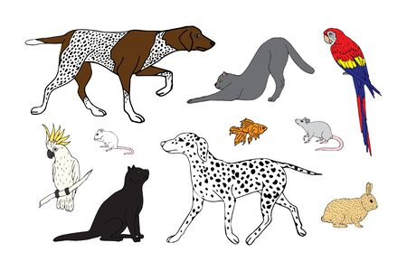 Vector hand drawn sketch doodle set bundle of different pets isolated on white background