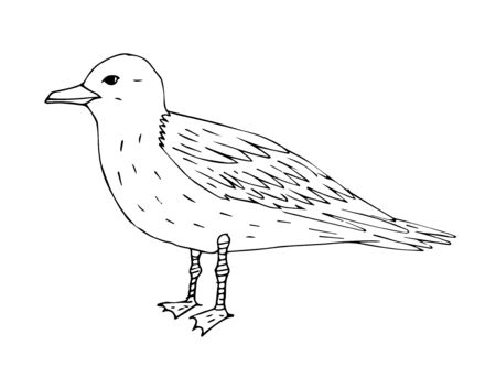 Vector hand drawn outline sketch sea gull isolated on white background
