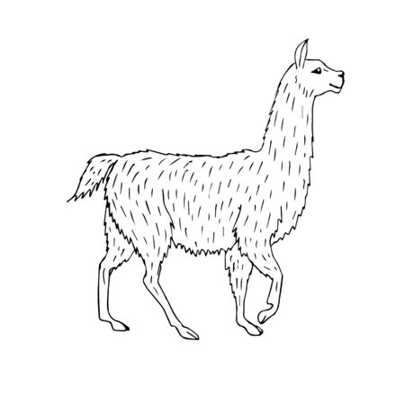 Vector hand drawn sketch doodle llama isolated on white background