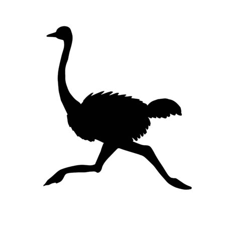 Vector black running ostrich silhouette isolated on white background