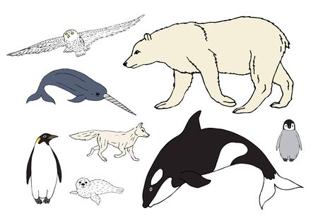 Vector set bundle of colored hand drawn doodle sketch polar north animals isolated on white background Иллюстрация