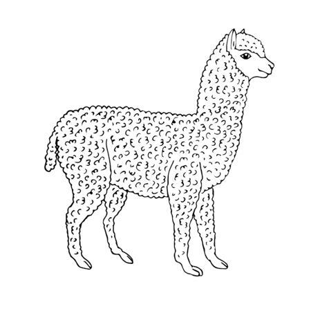 Vector hand drawn sketch alpaca isolated on white background Ilustração