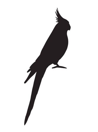 Vector black corella cockatiel parrot silhouette isolated on white background Иллюстрация