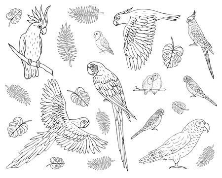 Vector set bundle of hand drawn doodle sketch different parrots isolated on white background Фото со стока - 137879229